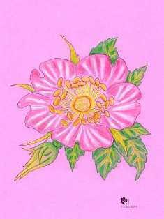 0-71-90-rose-1952-ill-ms-web.jpg