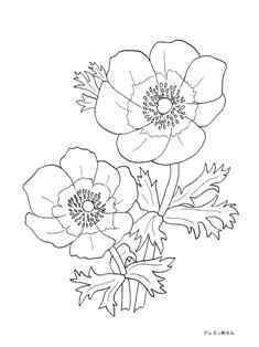 0-71-92-anemone-1953-sen-web.jpg