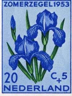 0-71-93- iris-1953-gazou-web.jpg