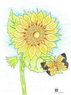 0-72-42-chou-sunflower-ill-ms-web.jpg