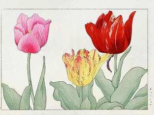 0-72-68-tulip-crain-gazou-web.jpg
