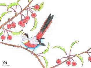 0-72-92-sakuranbo-bird-ill-ms-web.jpg