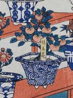 0-73-04-tachibana-bonsai-gazou-xweb.jpg