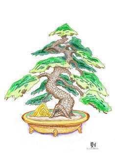 0-73-31-matsu-bonsai-ill-ms-web.jpg