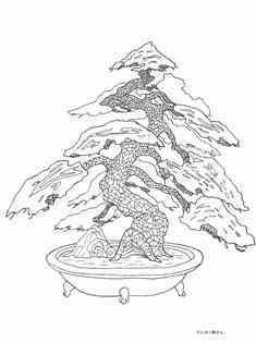 0-73-31-matsu-bonsai-sen-web.jpg