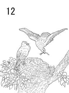 0-73-96-12-birds-sen-web.jpg