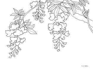 0-74-18-fuji-flower-sen-web.jpg