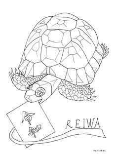 0-74-58-kame-reiwa-sen-web.jpg
