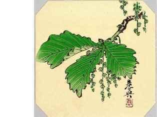 0-75-36-kashiwa-zeshin-gazou-web.jpg