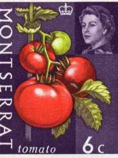 0-75-62-tomato-stamp-gazou-web.jpg
