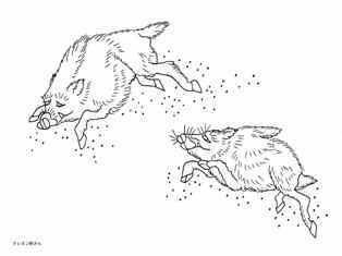 0-75-70-wild-boar-2-sen-web.jpg