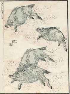 0-75-70-wild-boar-gazou-web.jpg