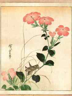 0-77-04-nadeshiko-hiroshige-gazou-web.jpg