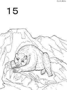 0-77-12-15-bear-sen-web.jpg