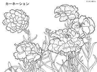 0-77-25-carnation-tanigami-sen-web.jpg