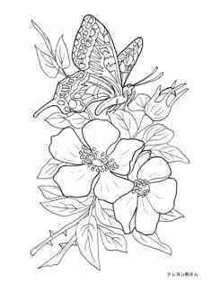 0-77-56-cho-flower-sen-web.jpg
