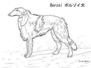 0-78-76-borzoi-dog-sen-web.jpg