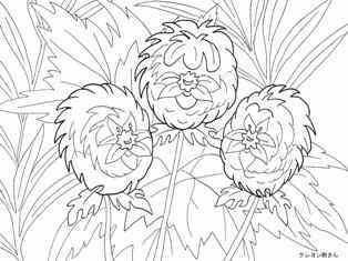 0-79-07-anemone-sen-web.jpg