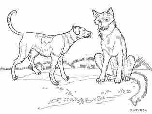 0-79-17-wolf-dog-sen-web.jpg