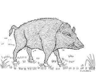 0-79-25-camboge-boar-sen-web.jpg