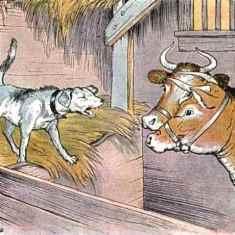 0-85-53-dog-cow-gazou-web.jpg