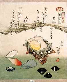 0-87-38-shell-hokkei-gazou-web.jpg