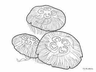 0-92-25-moon-jellyfish-sen-web.jpg