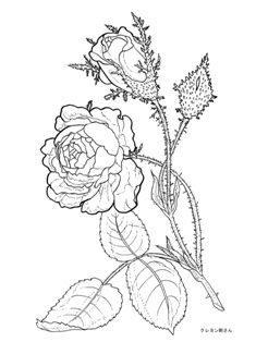0-99-64-rose-sen-web.jpg
